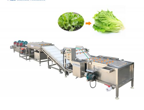 Vegetable washing and drying machine lettuce