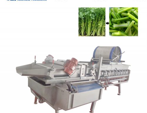 Vegetable vortex cleaning machine for clean vegetable distribution
